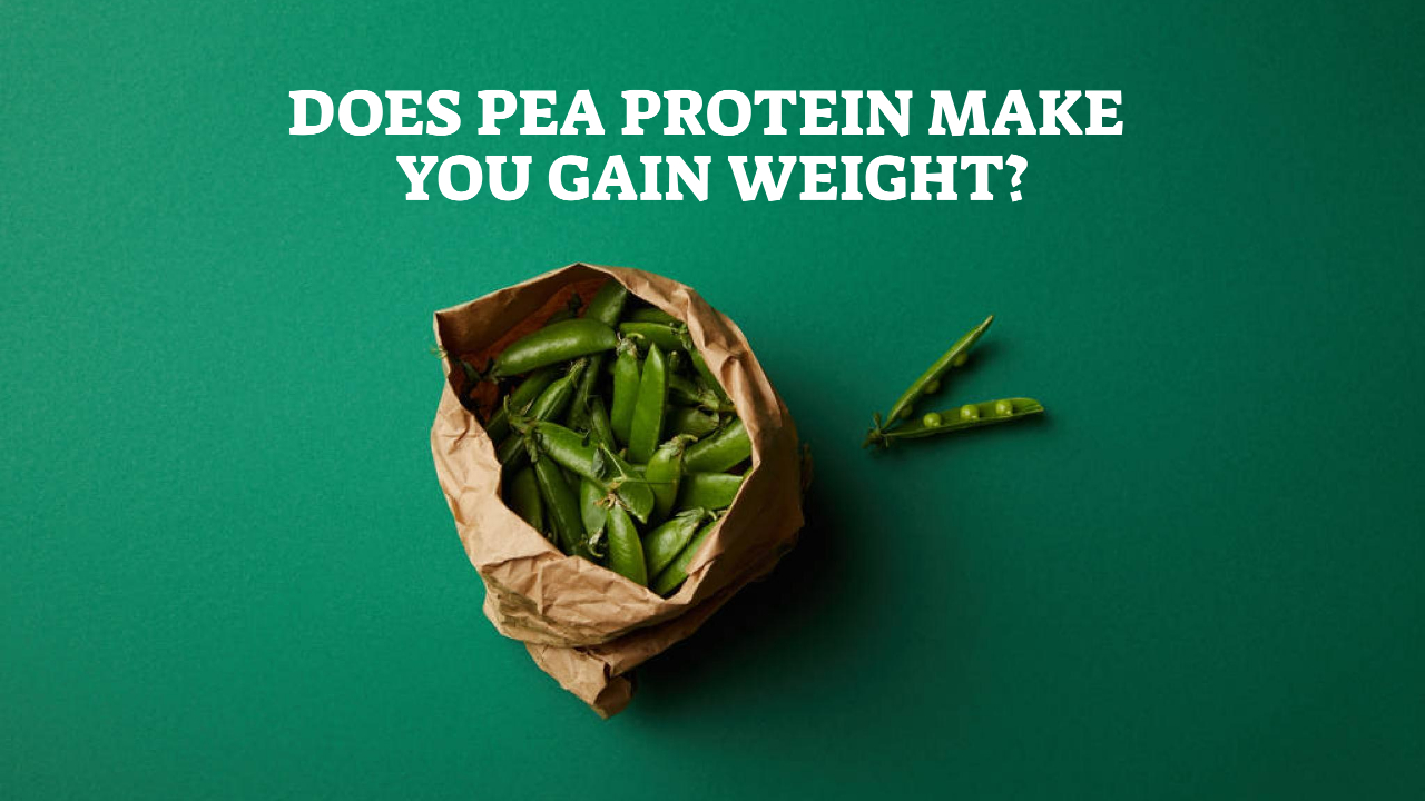 Does Pea Protein Make You Gain Weight